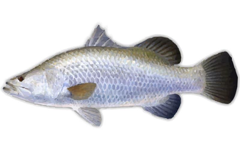 Barramundi, Where to catch Barramundi - Fishing Spots