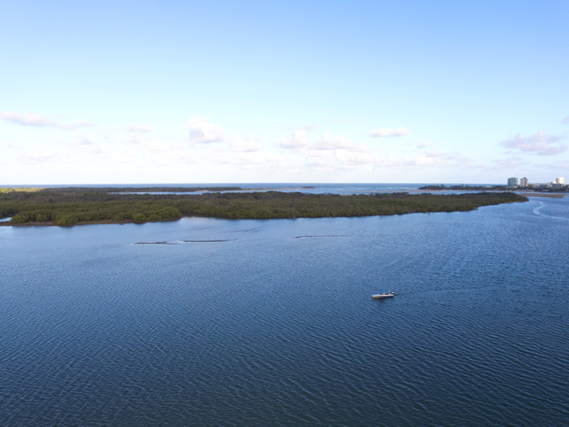 Maroochy Conservation area. On low tide there are good banks in the middle of this photo to pump for yabbies.