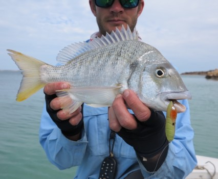 Bream on a popper at Shark Bay