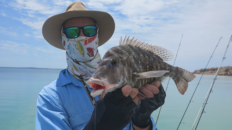 A Grass Emperor / Black Snapper took this clear soft plastics