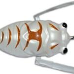insekta-cicada-lure-pearl-white-borwn