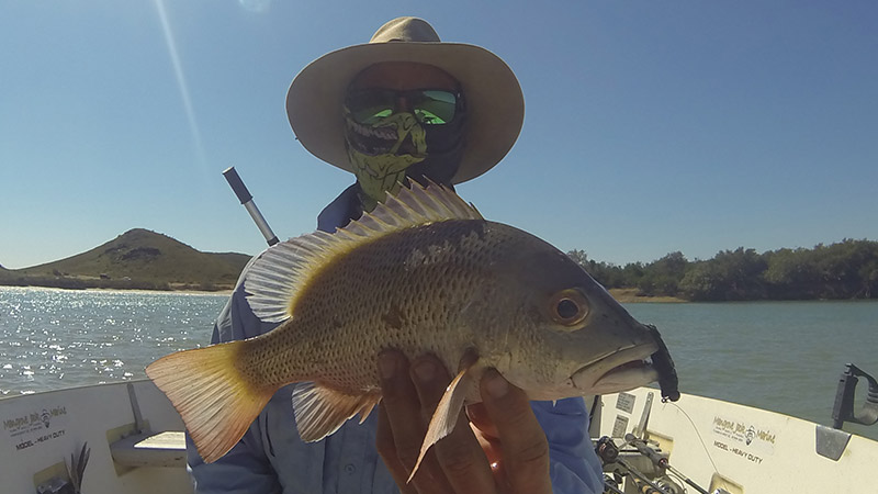 Mangrove Jack fishing at Cleaverville creek can be very productive
