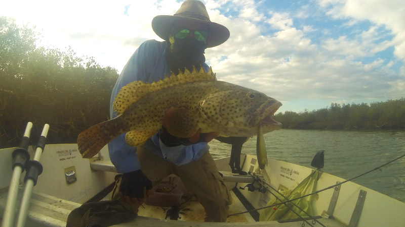 There are lots of big cod like this In the 3 creeks further to the west of Giralia Bay