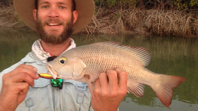 Mangrove jack from the snags of Port Smith
